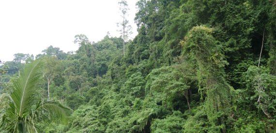 1-foresta