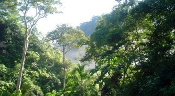 foresta El Milagro6